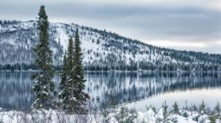 зима, снег, природа, ель, река