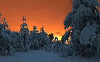 Зимняя сказка, зима, лес, снег, зимний лес, сосны, Харланов Никита