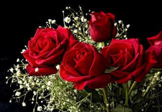 flowers, rose, bouquet, background