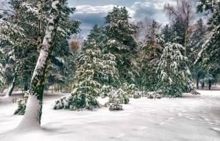 лес, деревья, березы, сосны, прогулка, снег, зима, Михаил MSH