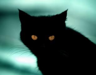кошка, черный, фон, кот, вид