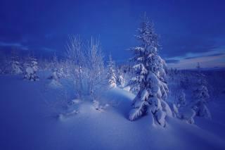 Норвегия, природа, зима, снег, деревья, ели, вечер