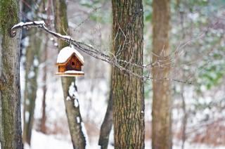 ветка, скворечник, снег, деревья, боке