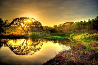 природа, деревья, закат