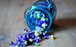 flowers, blue, Bank