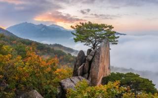 осень, облака, пейзаж, горы, природа, туман, дерево, скалы, рассвет, утро, Леса, сосна, Южная Корея, заповедник, Пукхансан