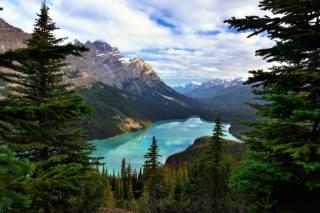 Банф, Национальный Парк, Альберта, горы, деревья, природа
