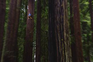 Sequoia, nature, trees, extreme