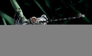 žába, moucha, ROBOT, makro