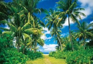 природа, тропики, пальмы, океан
