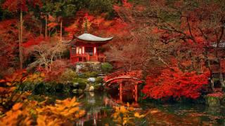 Япония, сад, парк, пруд, осень, деревья, пагода, беседка, мостик, КУСТЫ