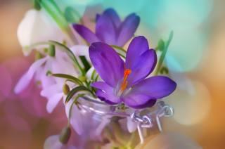 květiny, boke, banky, krokusy, jaro, sněženky