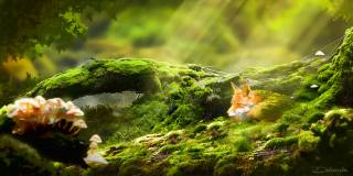 Fox, forest, moss, rays