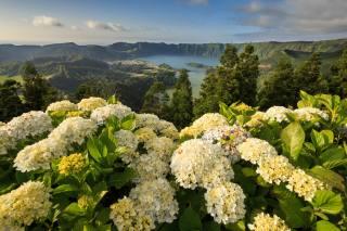 пейзаж, КУСТЫ, цветы, гортензия, озера, горы, природа