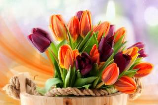 kbelík, květiny, tulipány, boke