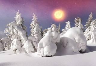 зима, снег, сугробы, ели, солнце