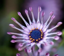 květina, krásně