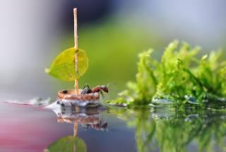 water, macro, nature, sheet, reflection, sailboat, ant, sail, insect, boat