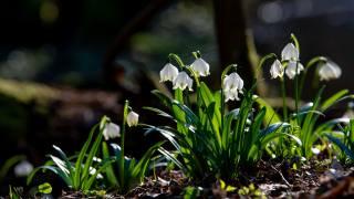 květiny, jaro, kvetoucí, rostliny, země, listy