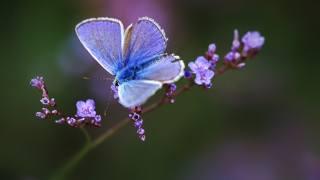 природа, весна, ветка, цветы, цветение, насекомое, бабочка, макро