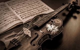 violin, tree, music, notes