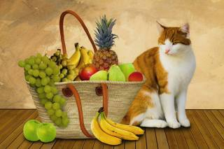 кішка, фрукти, кошик