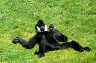 мавпочка, фото, позитив