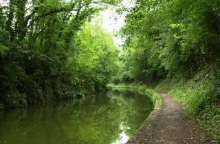 trees, river, reflection, landscape, summer