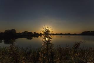 the lake, grass, sunset