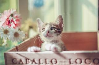 Zvíře, kotě, mládě, pohled, box, květiny