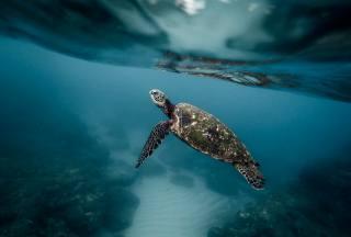 Zvíře, želva, příroda, voda, dno