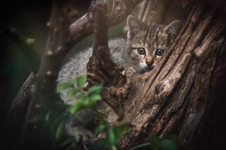Zvíře, kotě, mládě, pohled, příroda, strom, větvičky