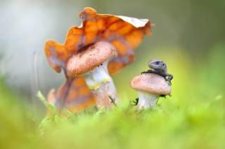 macro, nature, moss, sheet, mushrooms, lizard