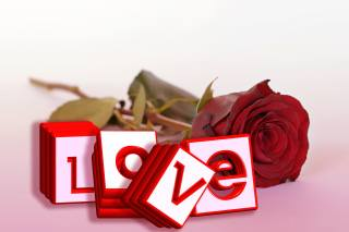 цветы, розы, английский, Любовь