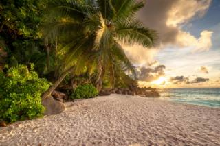 Seychelles, sea, the beach, sand, Palma