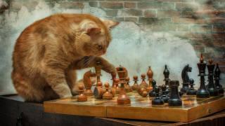рыжий, кот, играет, шахматы