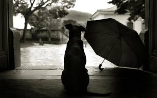 dog, each, umbrella, BW
