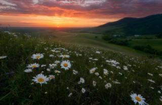 лето, пейзаж, цветы, горы, природа, восход, рассвет, ромашки, утро, луга, Павел Силиненко