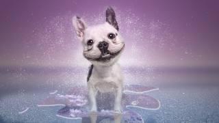 pes, úsměv