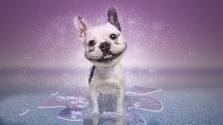 dog, smile
