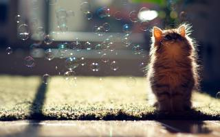 animals, soap bubbles, cats, cute, kittens