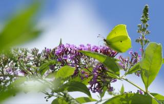 macro, nature, flowers, butterfly, the sky