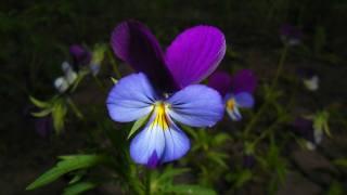 makro, květina