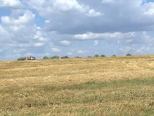 Сбор урожая, поле, комбайны, небо, облака