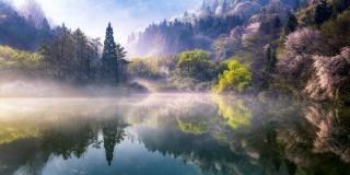 trees, nature, fog, the lake, spring, morning, South Korea