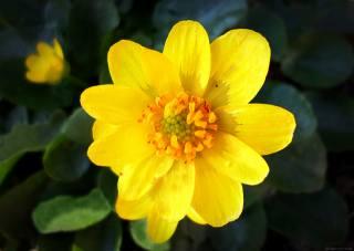 Апрель, весна, цветок