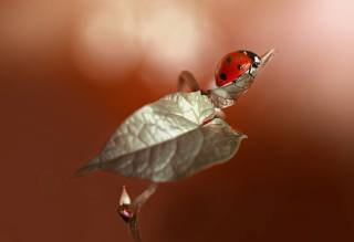 Rina Barbieri, macro, nature, Rostock, leaves, beetle, ladybug