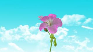 minimalism, flower, the sky, clouds