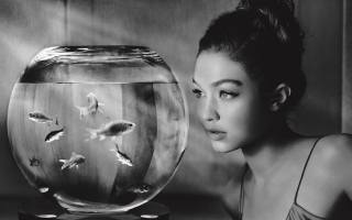 černobílé, akvárium, rybky