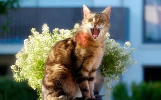 кіт, квіти, Композиція